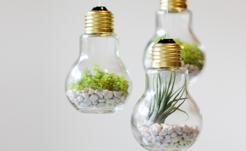 Lightbulb Terrarium Diy Snug Hug Co
