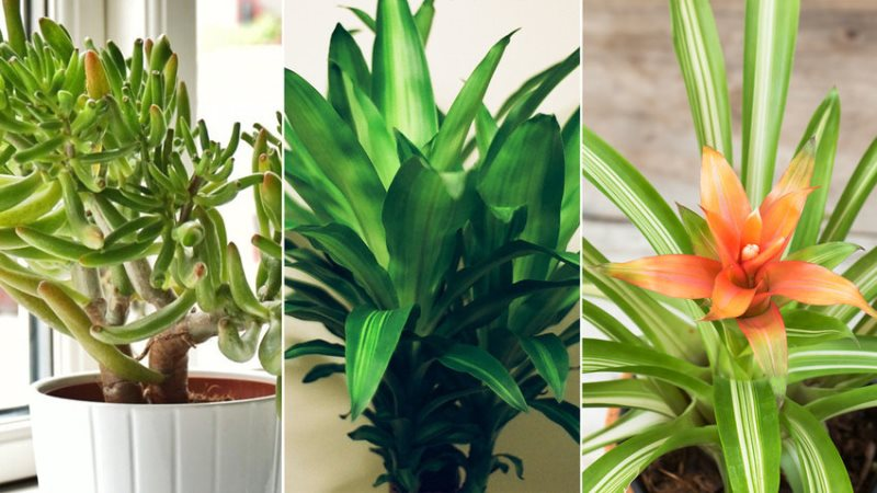 Beautiful Air Purifying Plants You Need In Your Home